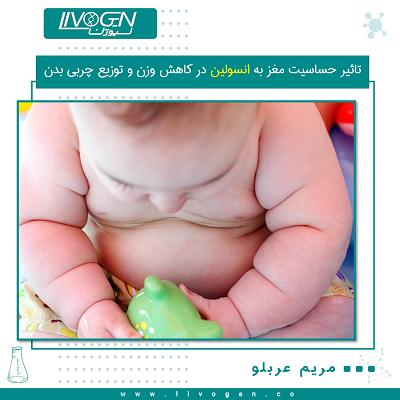 حساسیت مغز به انسولین در کاهش وزن و توزیع چربی بدن خدمات آزمایشگاهی