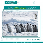 پنگوئن میزان زیادی اکسید نیتروژن در اطراف خود ایجاد می کند.هنگام مطالعه پنگوئن های پادشاه در جزیره آتلانتیک جورجیا جنوبی بین آمریکای جنوبی و قطب جنوب ، دانشمندان متوجه میزان بالای تولید اکسید نیتروژن یا همان گاز خنده شدند. اکسید نیتروژن علاوه بر اینکه بر آب و هوا تاثیر دارد ، تأثیر بسیار زیادی به عنوان گاز خنده و آرام بخش دارد که در دندانپزشک استفاده می شود. اکسید نیتروژن 300 برابر بیشتر از دی اکسید کربن محیط زیست را آلوده می کند. اکسید نیتروژن با رژیم پنگوئن کریل و ماهی توضیح داده می شود که حاوی مقادیر زیادی ازت است. نیتروژن از مدفوع پنگوئن ها به داخل زمین و باکتری های خاک آزاد می شود و سپس به اکسید نیتروژن ، گاز گلخانه ای تبدیل می شود.