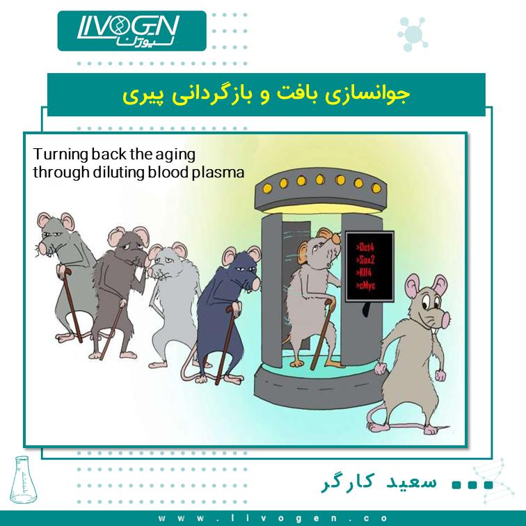 رقیق کردن پلاسمای خون باعث جوانسازی بافت و بازگردانی پیری در موش ها می شود.  یک مطالعه جدید نشان می دهد که جابجایی نیمی از پلاسمای خون با ترکیبی از سرم فیزیولوژیک و آلبومین موجب بازگردانی نشانه های پیری، جوان شدن بافت های ماهیچه ها، مغز و کبد در موش های پیر می شود. این تیم تحقیقاتی در حال حاضر آزمایشات بالینی برای اینکه مشخص کنند که آیا تعویض پلاسما اصلاح شده در انسان می تواند برای معالجه بیماری های مرتبط با سن و بهبود سلامت کلی افراد سالخورده استفاده کرد، در حال انجام هستند.