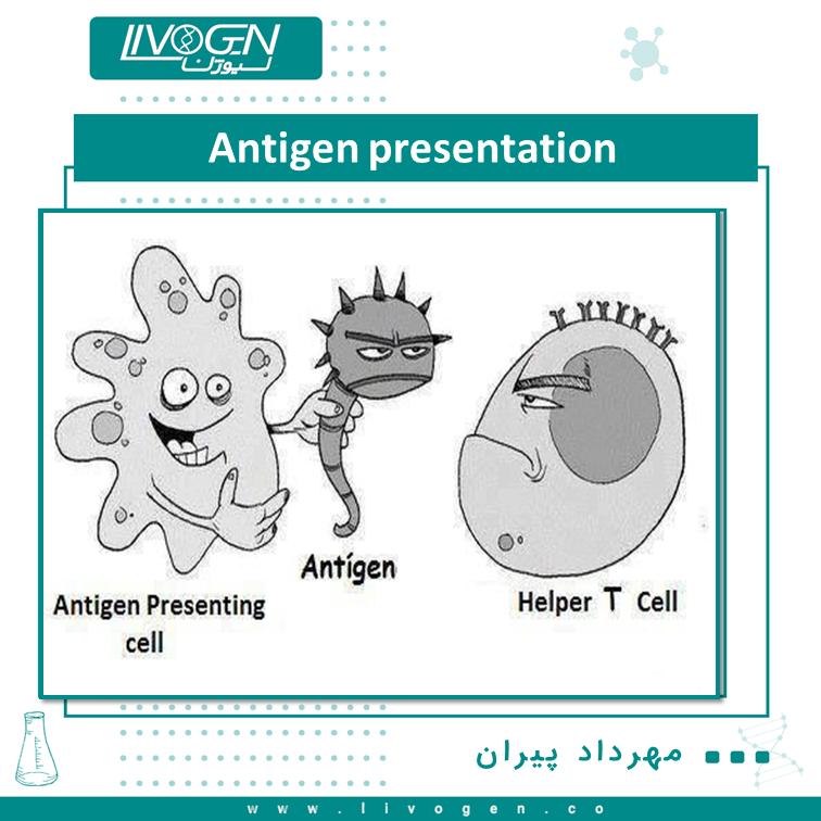 Antigen presentation شناسایی سلولهای دارای عفونت یا سلولهای سرطانی توسط سلولهایT ، وابسته به پردازش و ارائه پپتیدهای خودی و غیر خودی برروی سطح سلول های ارائه دهنده آنتی ژن (APC) صورت میگیرد. دو مسیر اصلی برای پردازش و ارائه آنتی ژن شناسایی شده است.