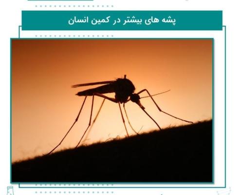 پشه های بیشتر در کمین انسان