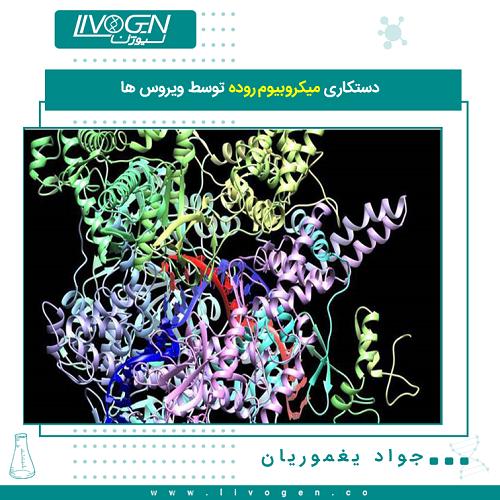 دستکاری میکروبیوم روده توسط ویروس ها