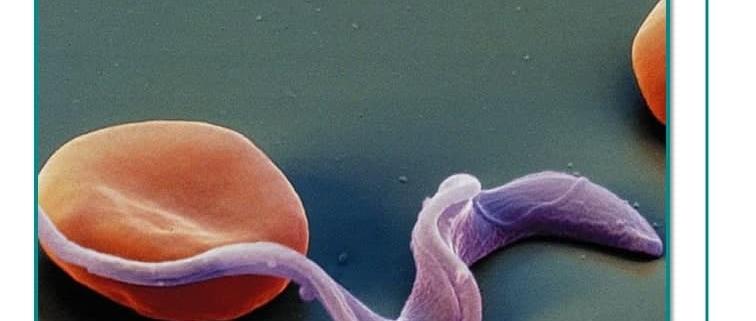داروی شاگاس ناجی انسان ها در برابر کووید-19 خواهد بود؟