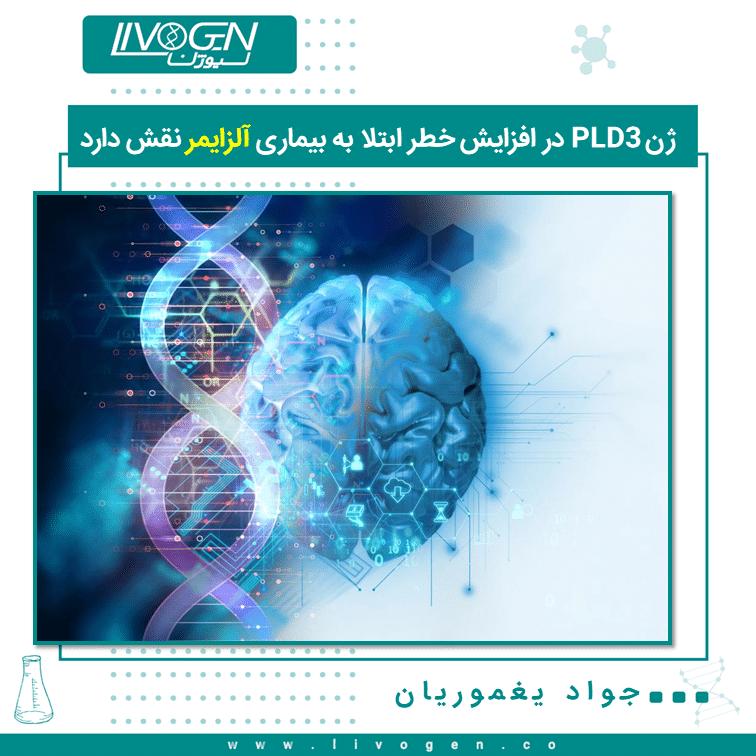 ژنPLD3  در افزایش خطر ابتلا به بیماری آلزایمر نقش دارد