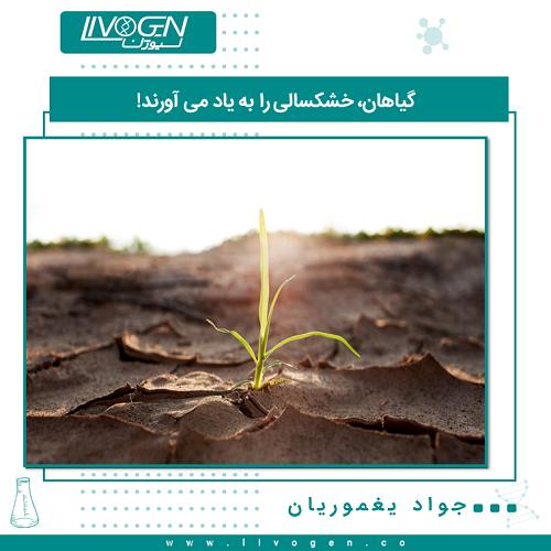 گیاهان، خشکسالی را به یاد می آورند! در طول خشکسالی، گیاهان از یک مولکول سیگنالینگ استفاده می کنند که از طریق مطالعات حیوانی شناخته شده است و این مولکول از دست دادن آب در آن ها را محدود میکند. این مولکول نوعی حافظه از خشک سالی ایام را برای آن ها فراهم می کند.